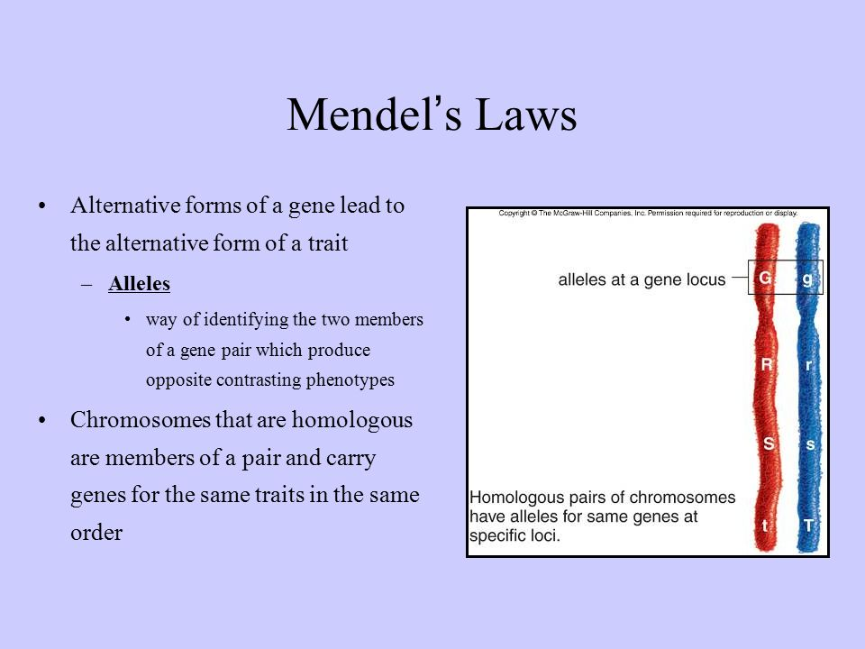 mendel s approach on patterns of inheritance The laws of inheritance were in one of his experiments on inheritance patterns  while the forked-line method is a diagrammatic approach to keeping.