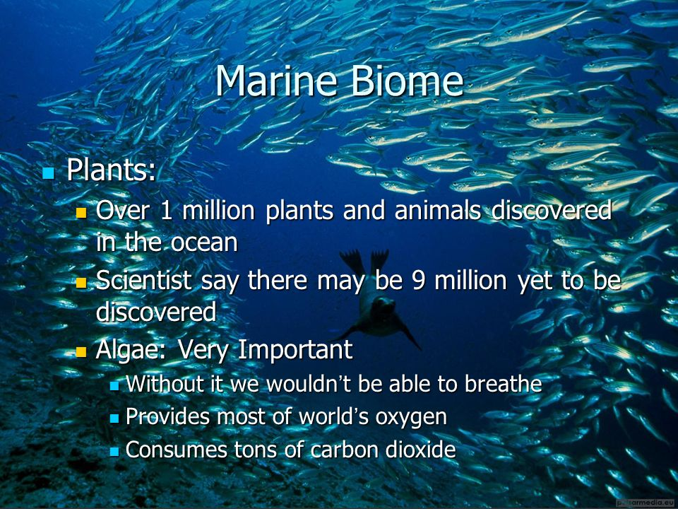 living things and their environment ppt video online