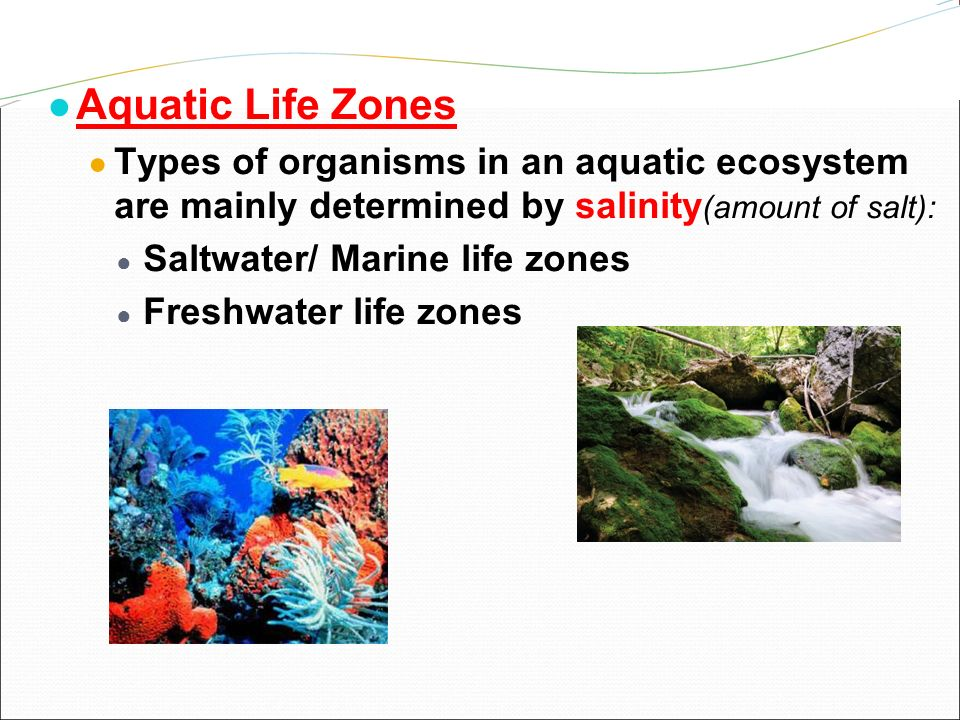 the importance of microscopic organisms in aquatic ecosystems Aquatic organisms  nevertheless, the primary productivity of freshwater aquatic ecosystems is reduced considerably below ph 50, which, in turn.