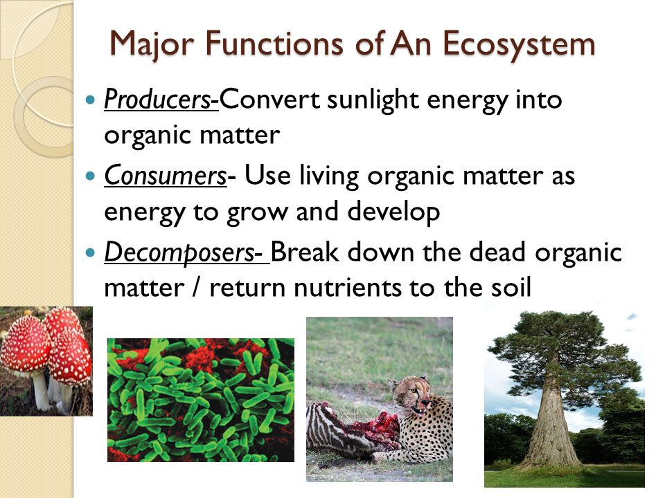 functions of soil organic matter pdf