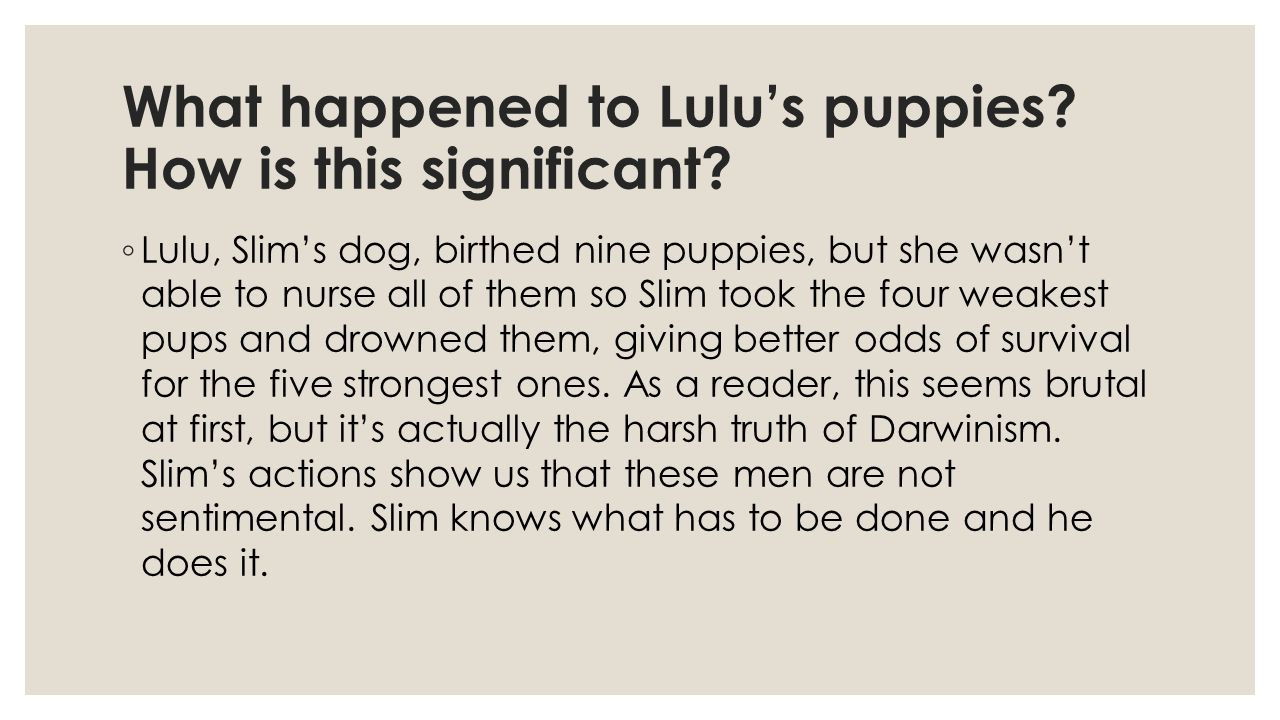 What happened to Lulu's puppies How is this significant