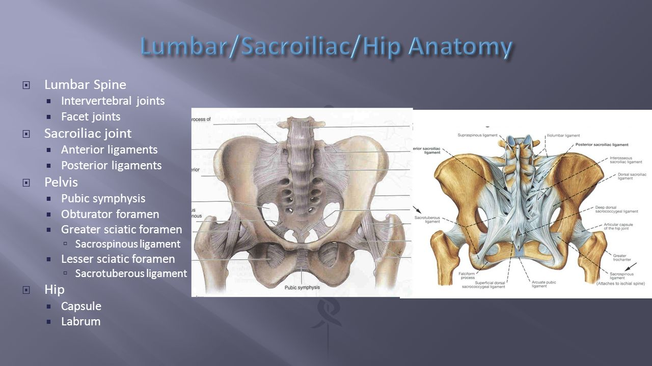 Spinal joints anatomy