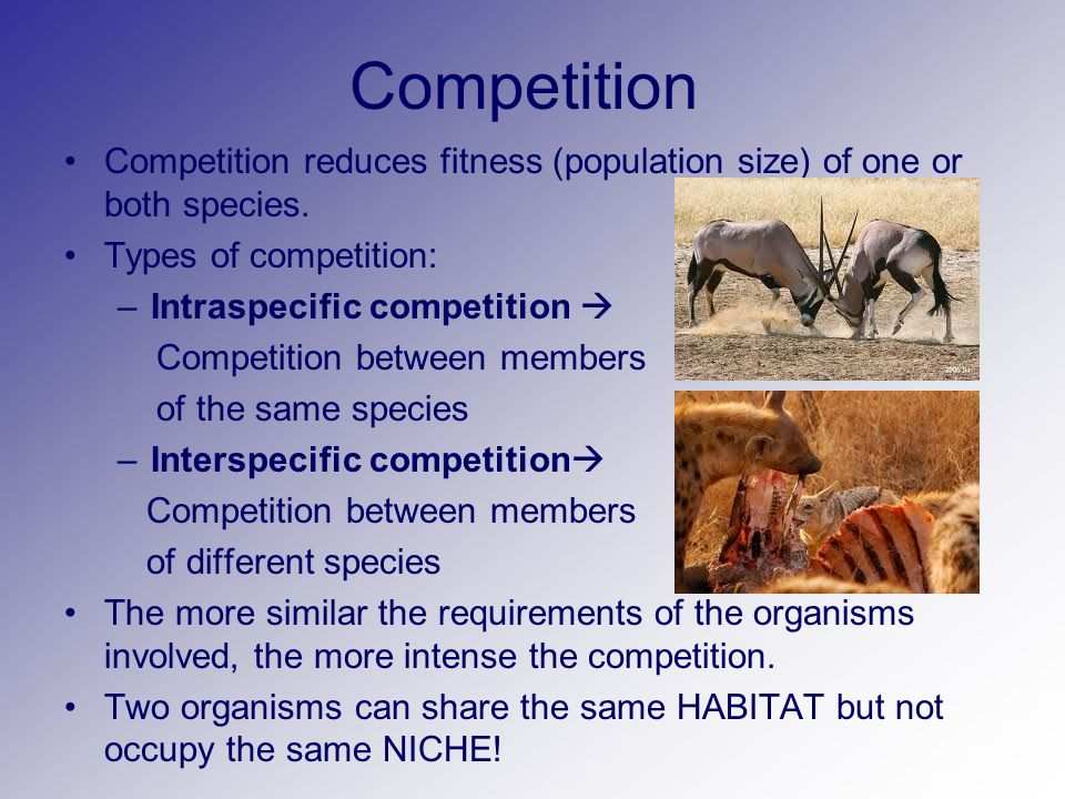 what is the relationship between competition and population size
