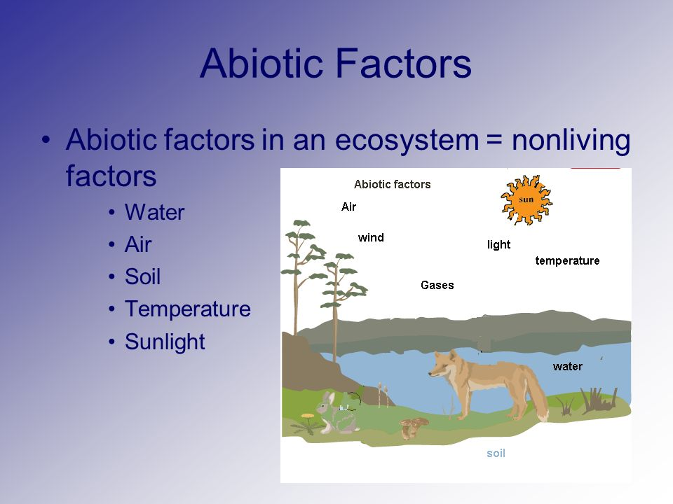 Levels Of Ecological Organization Bio B Ppt Download