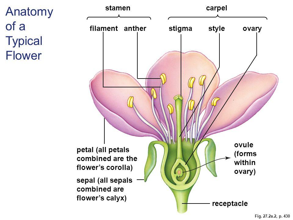 Anatomy of flowers