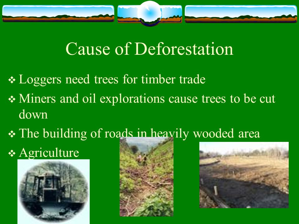 discuss causes and hazards of deforestation
