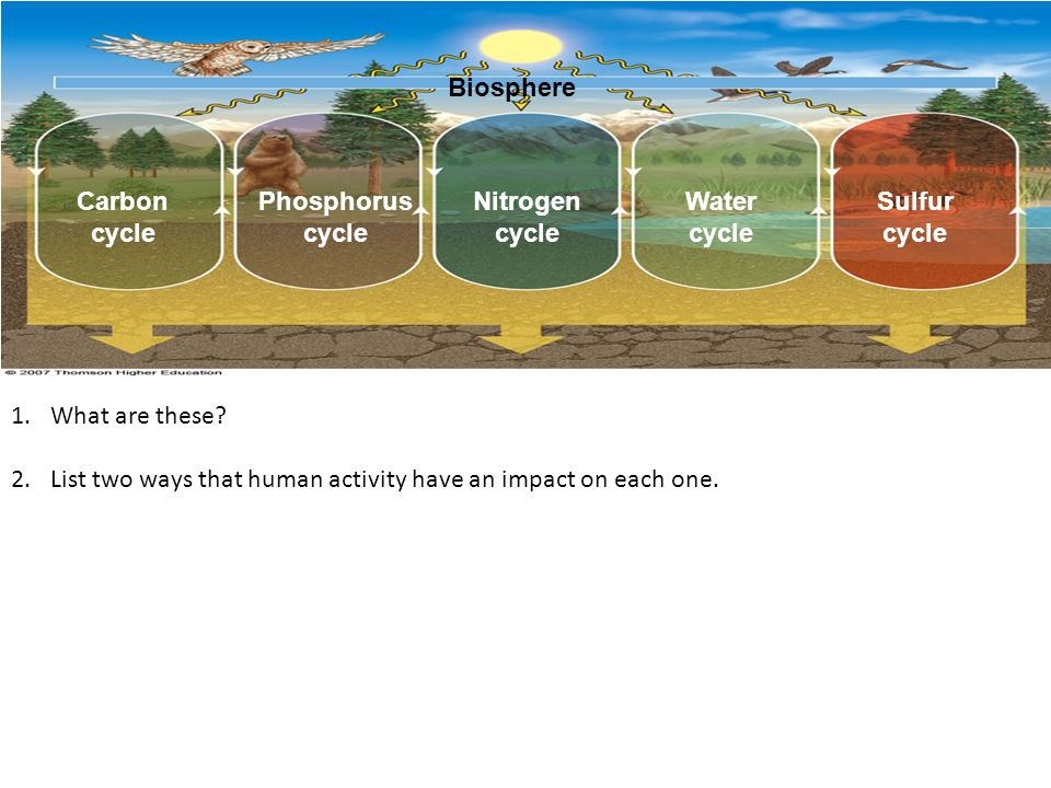 How human activities affect the carbon cycle