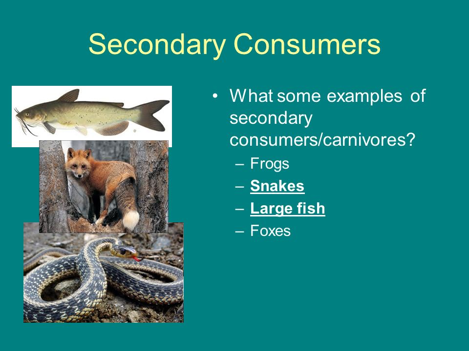 Catalyst Based On The Food Chain Shown What Would Most Likely