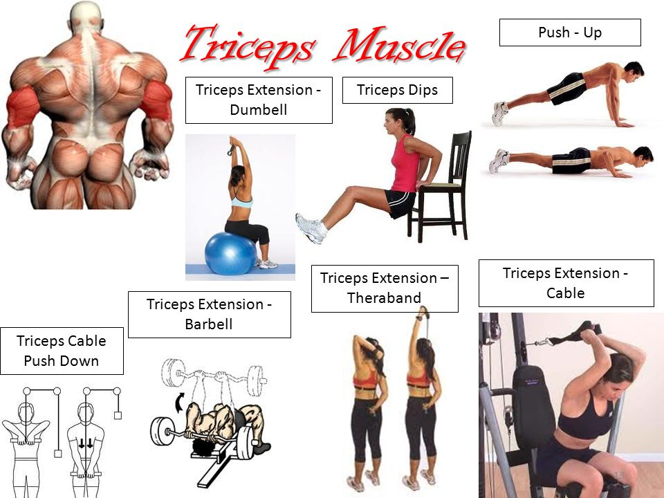 Designing Exercise Programs: *Layout *Muscle Groups ...  Tricep Pulldown Vs Pushdown