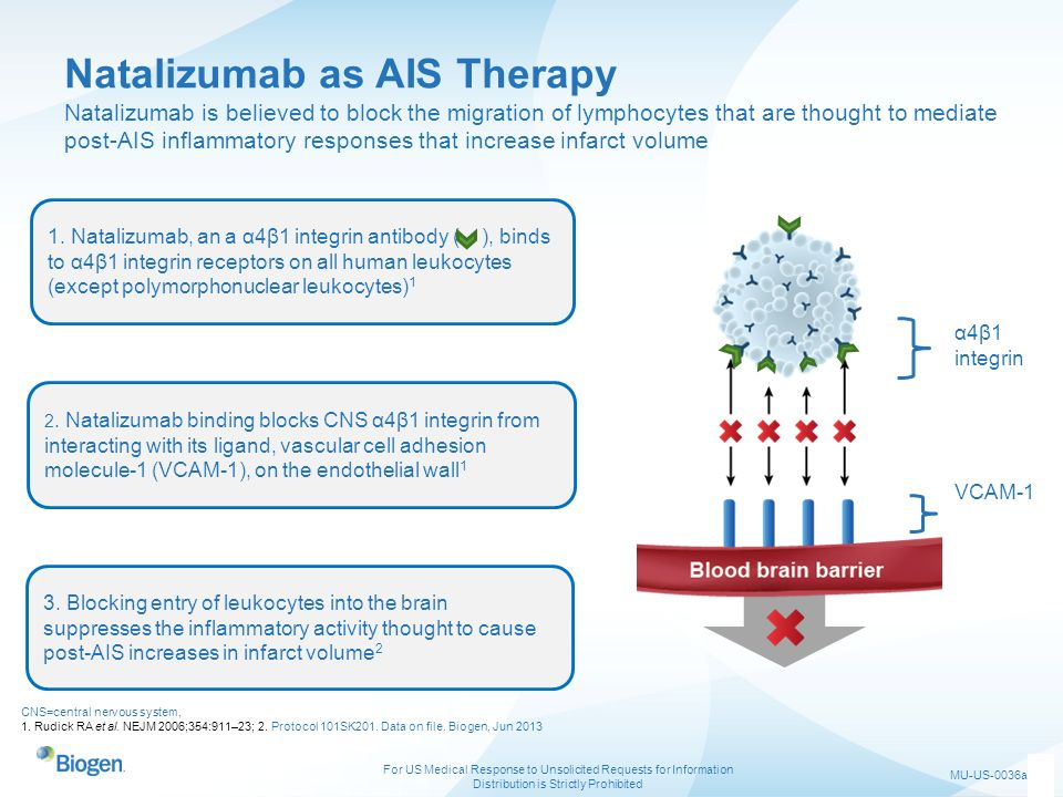 Natalizumab as AIS Therapy Natalizumab is believed to block the migration of lymphocytes that are thought to mediate post-AIS inflammatory responses that increase infarct volume