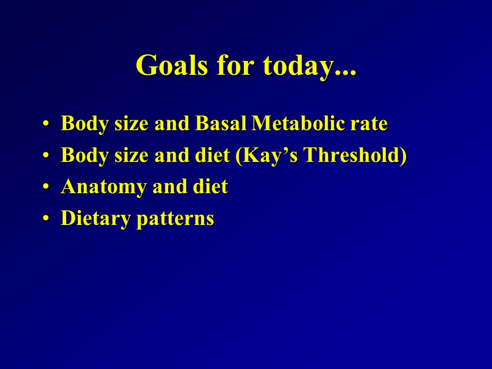 metabolic rate and body size relationship objects