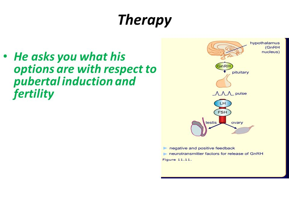 Therapy He asks you what his options are with respect to pubertal induction and fertility