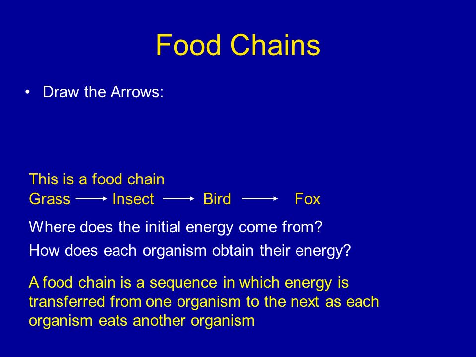 Food Chains Draw the Arrows: This is a food chain Grass Insect Bird