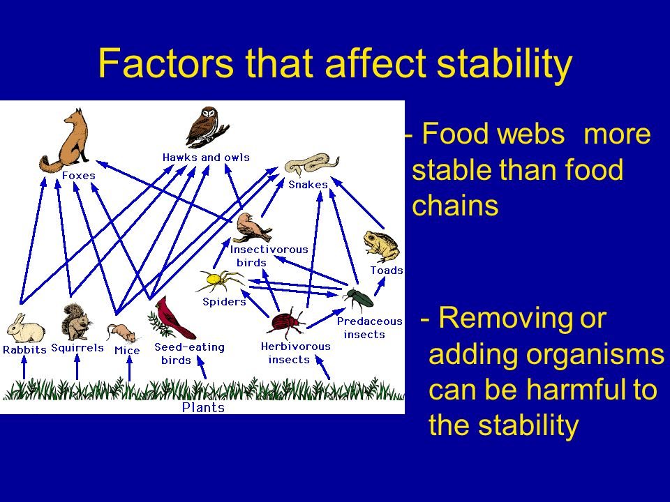 Factors that affect stability