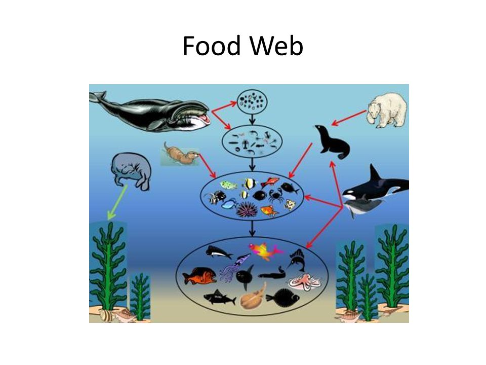 food chain ppt video online download