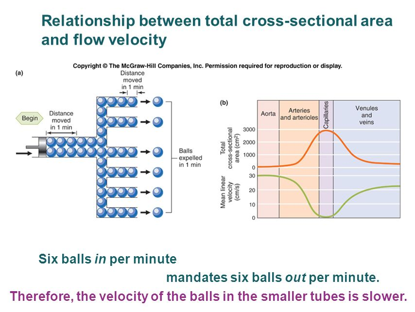 describe the relationship between velocity of blood flow and cross sectional area