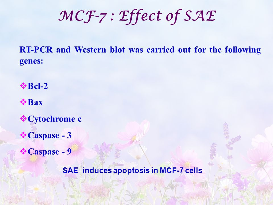 MCF-7 : Effect of SAE RT-PCR and Western blot was carried out for the following genes: Bcl-2. Bax.