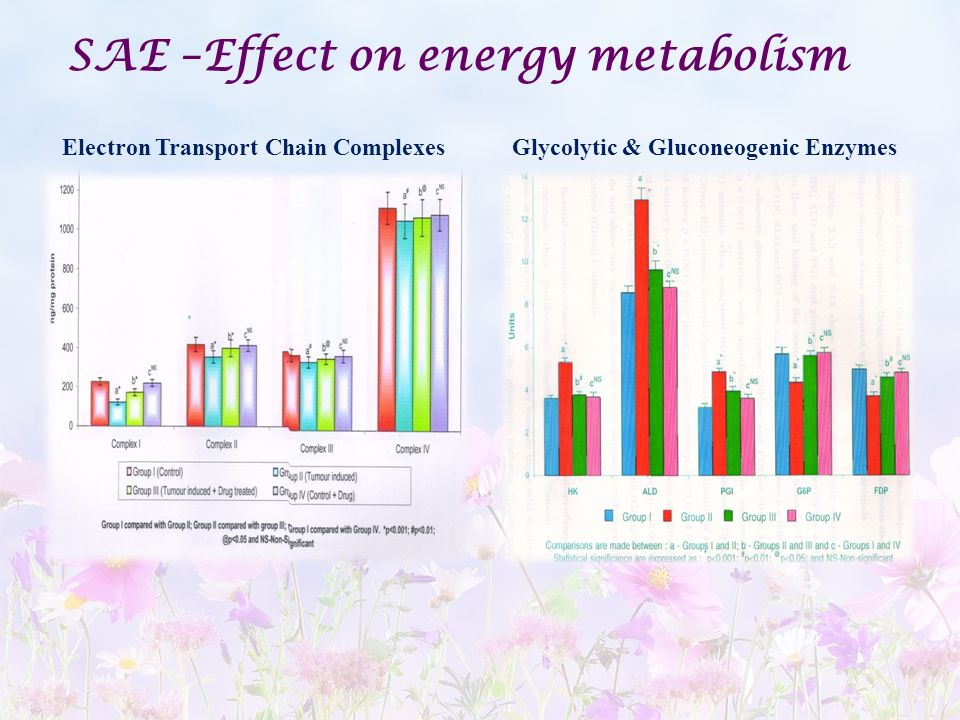 SAE –Effect on energy metabolism