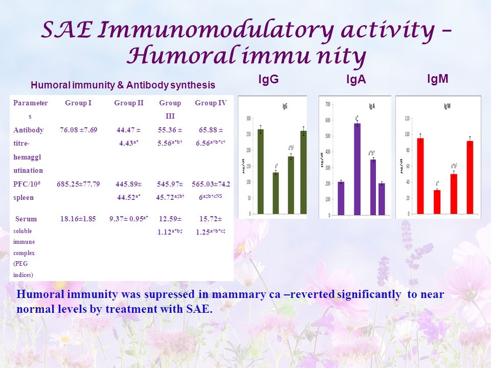 SAE Immunomodulatory activity – Humoral immunity & Antibody synthesis