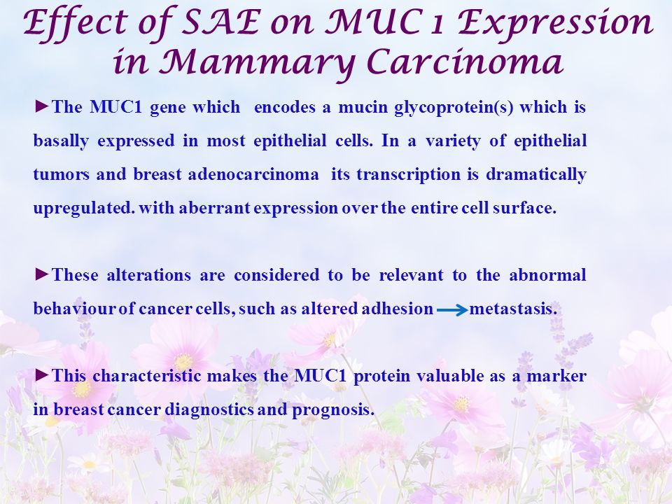 Effect of SAE on MUC 1 Expression in Mammary Carcinoma