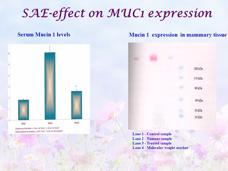 SAE-effect on MUC1 expression