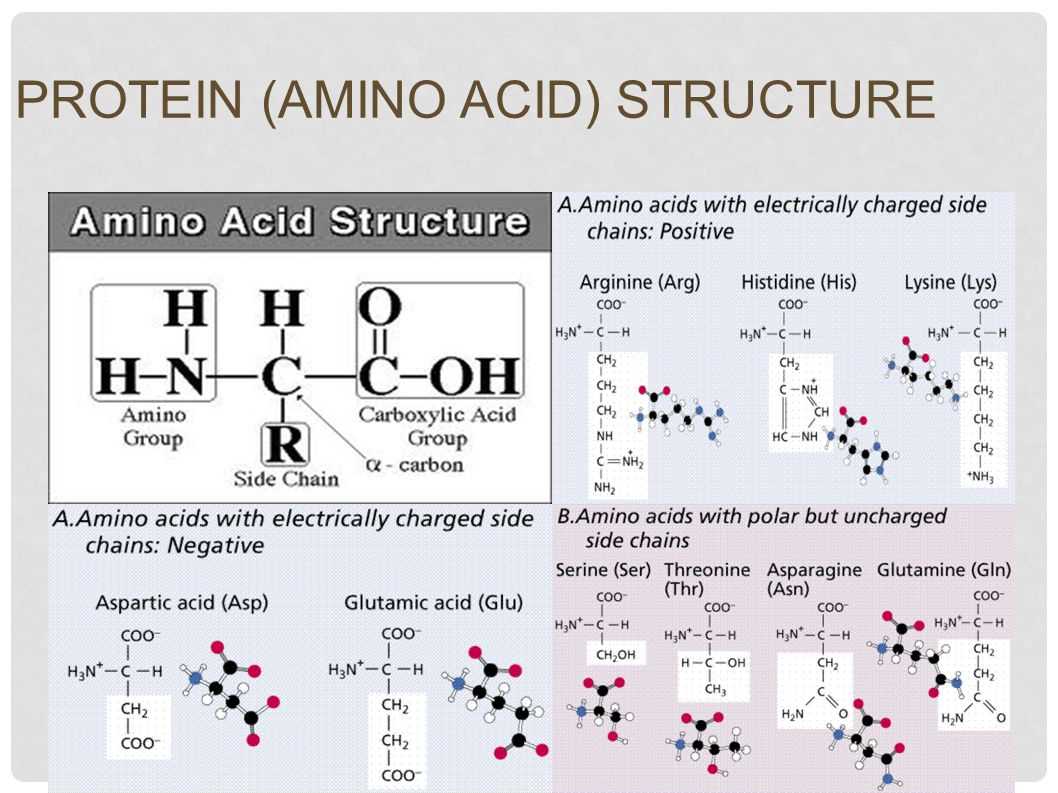 Protein Building Blocks The A Amino Acids Chemistry