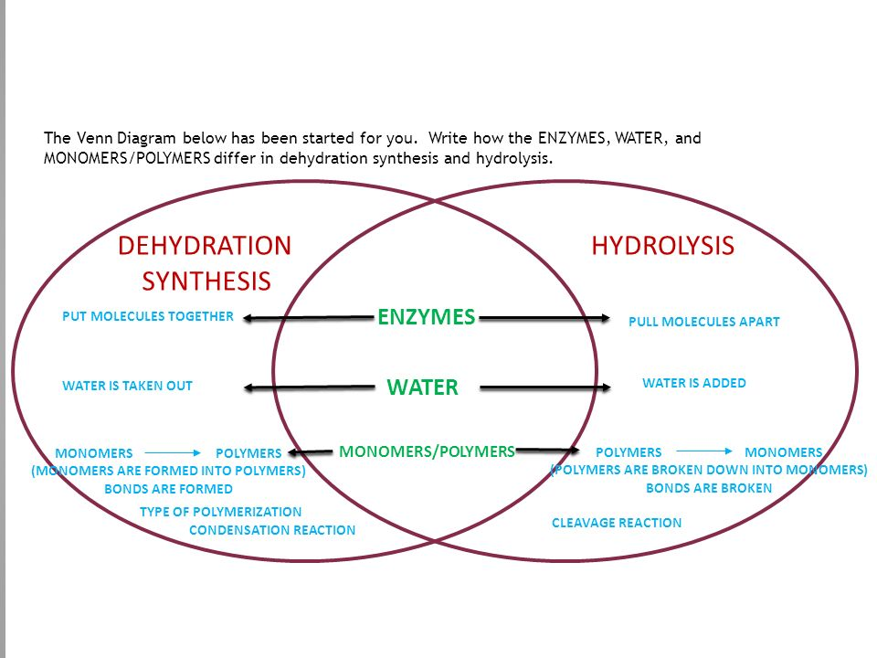 Dehydration Reaction Diagram Chemistry Review Secti...