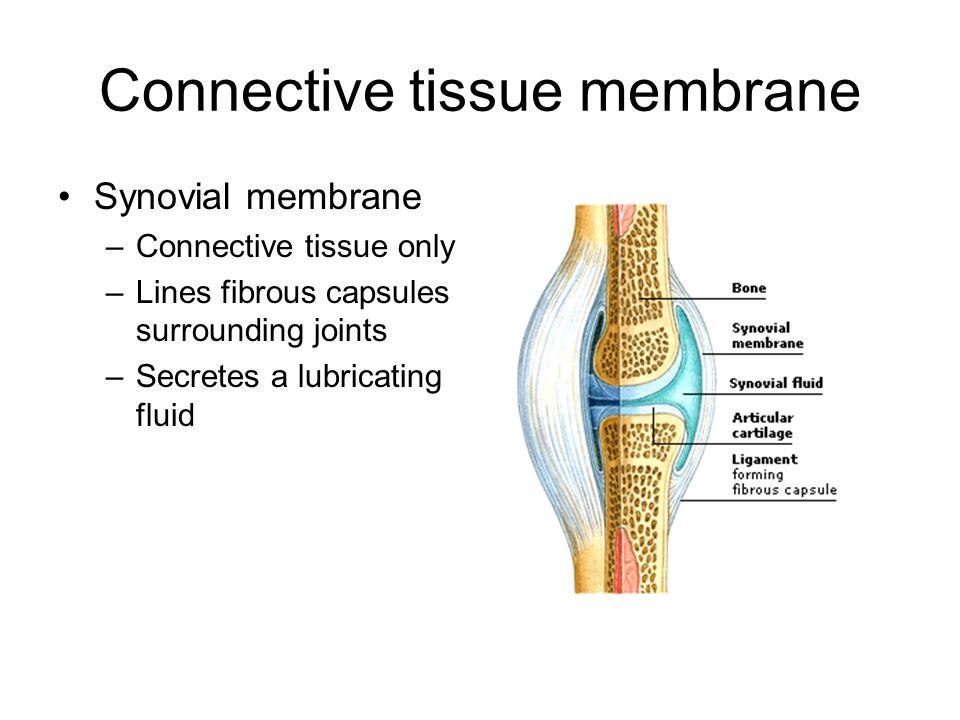 a synovial membrane secretes synovial fluid Key takeaways key points the bones of a synovial joint are surrounded by a synovial capsule, which secretes synovial fluid to lubricate and nourish the joint while.