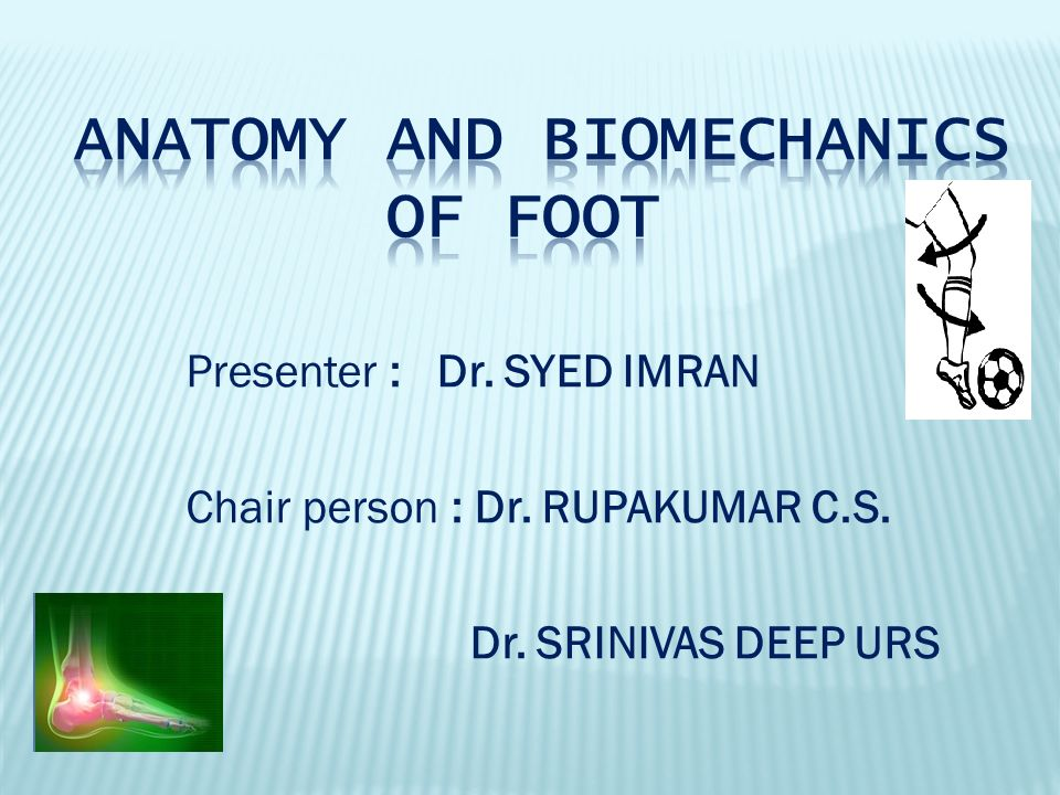 ANATOMY AND BIOMECHANICS OF FOOT - ppt video online download