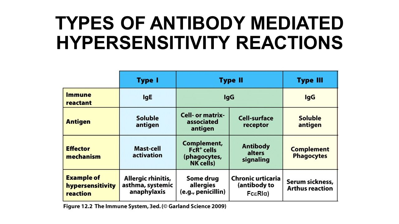 HYPERSENSITIVITY REACTIONS AND AUTOIMMUNITY - ppt download