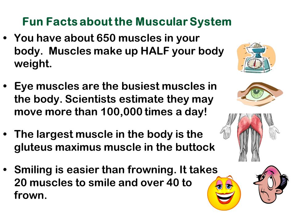 the muscular system: moving your body - ppt download, Muscles