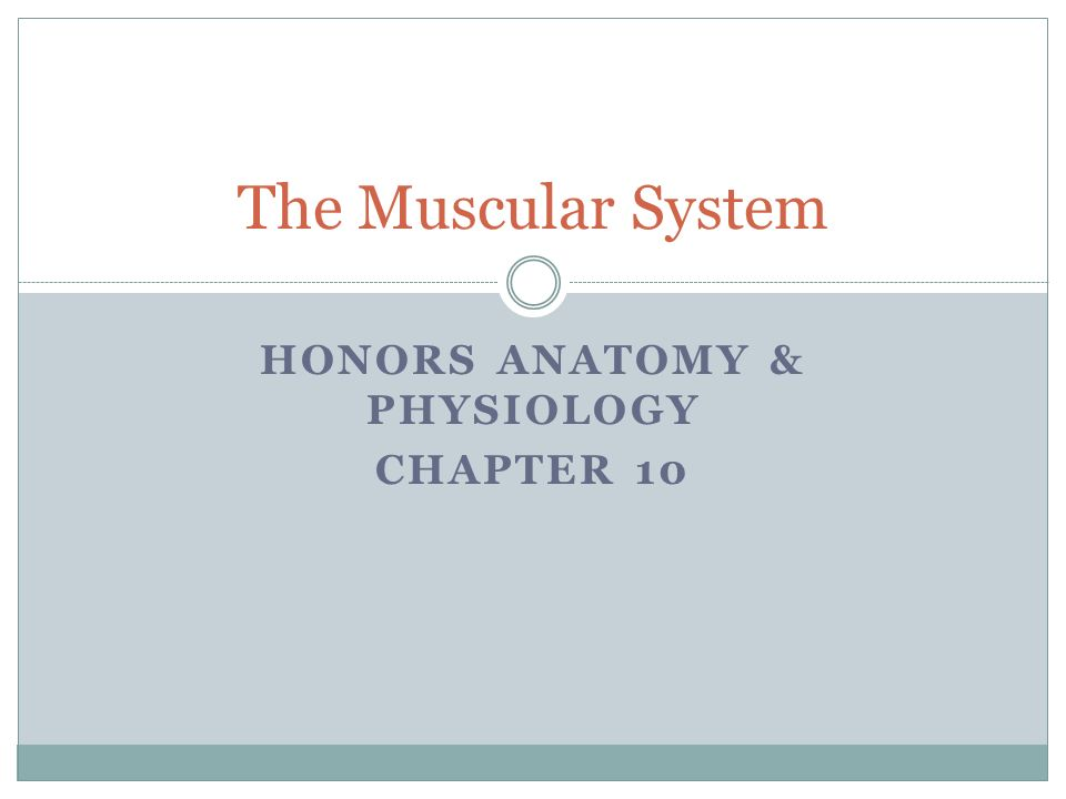 anatomy and physiology honors Name _____ honors anatomy and physiology application procedure: completion deadline of feb 17 honors anatomy and physiology will explore.