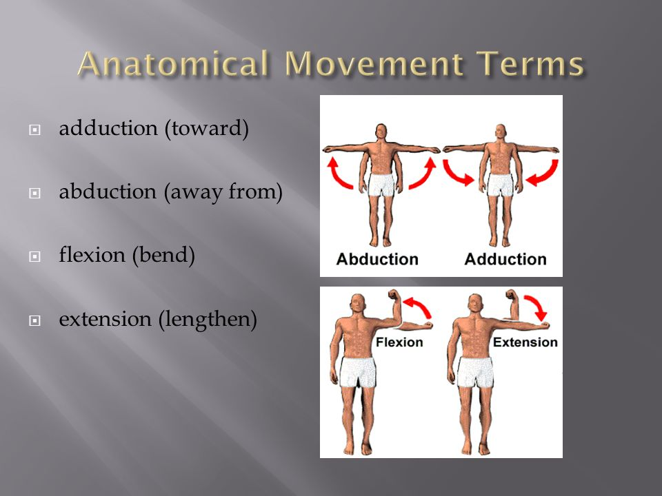Directional Terms And Body Cavities Ppt Download