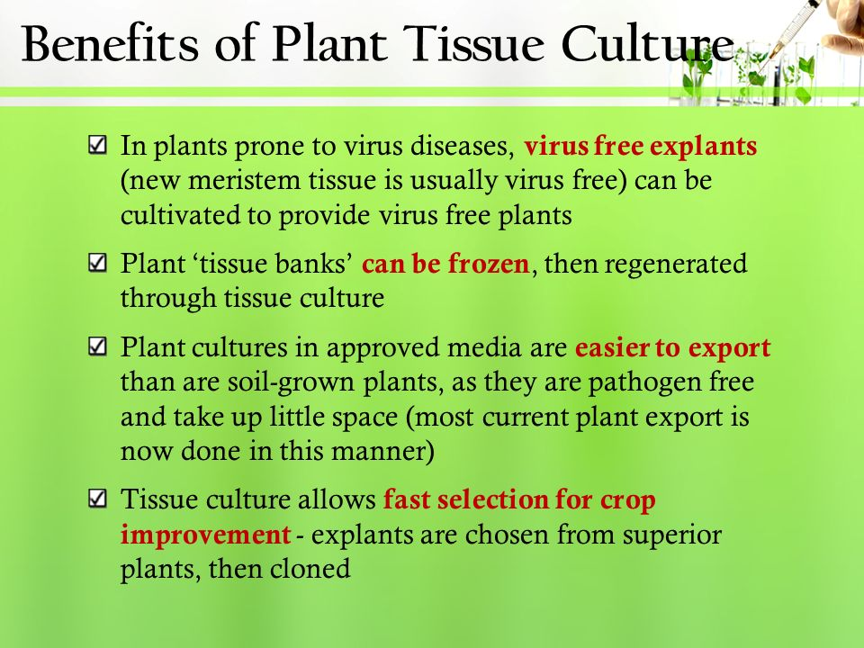 thesis online on plant tissue culture General ordering information how does our custom writing service work how do i fill in the order form phd thesis on plant tissue culture phd thesis on plant tissue.