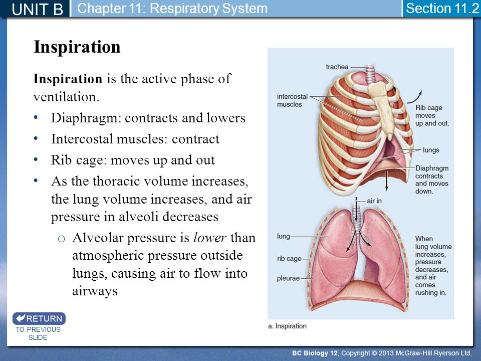 Lung Ventilation System : Presentation title slide ppt video online download