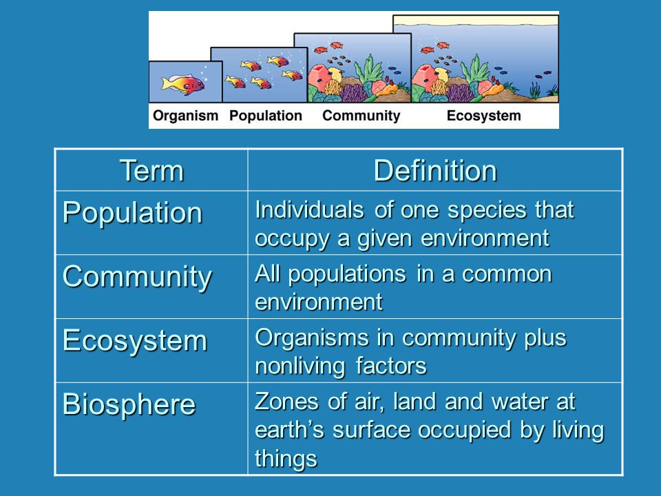 Ecology: Communities. - ppt video online download
