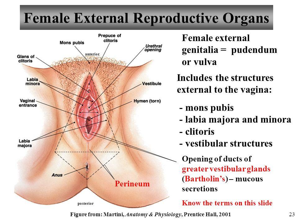 Anatomy Female Vagina Hot Nude