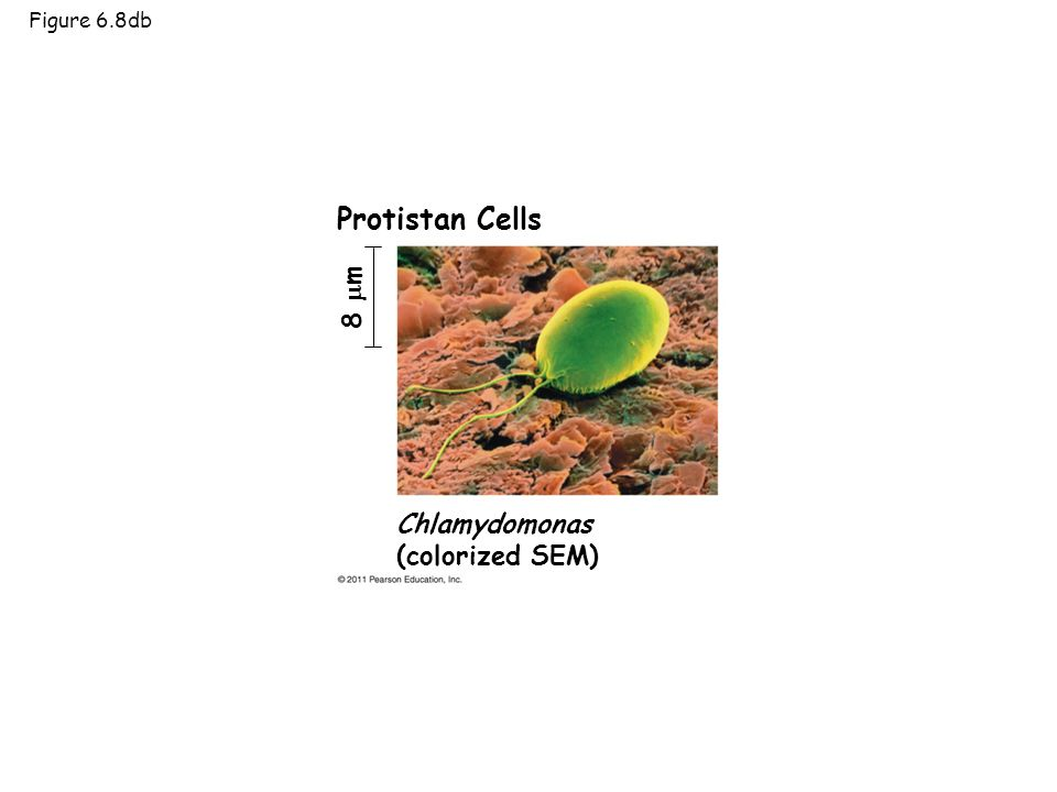 Chapter 6 A Tour of the Cell. - ppt download