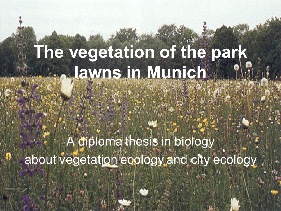 The vegetation of the park lawns in Munich