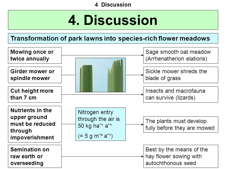 4 Discussion 4. Discussion. Transformation of park lawns into species-rich flower meadows. Mowing once or twice annually.