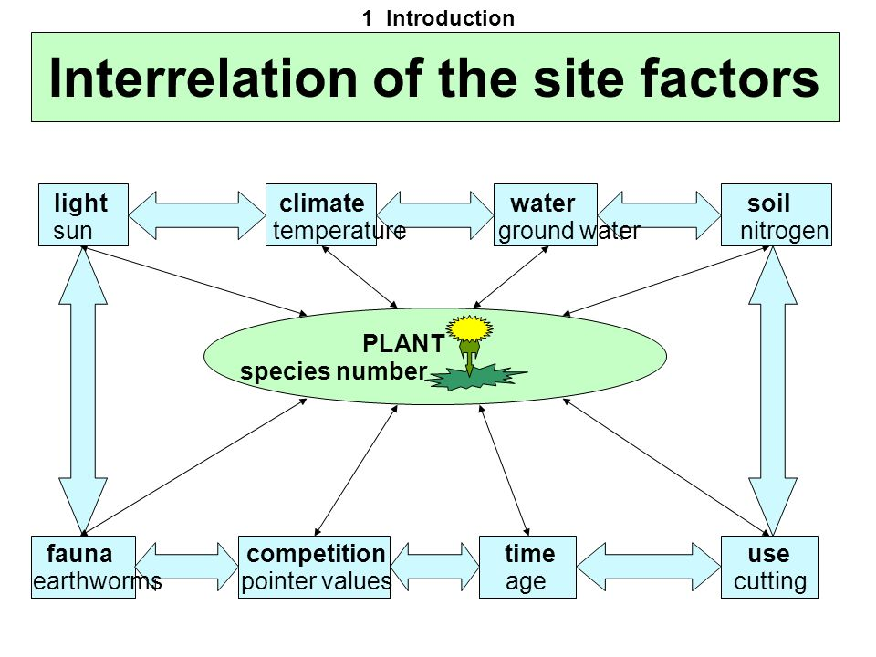 Interrelation of the site factors