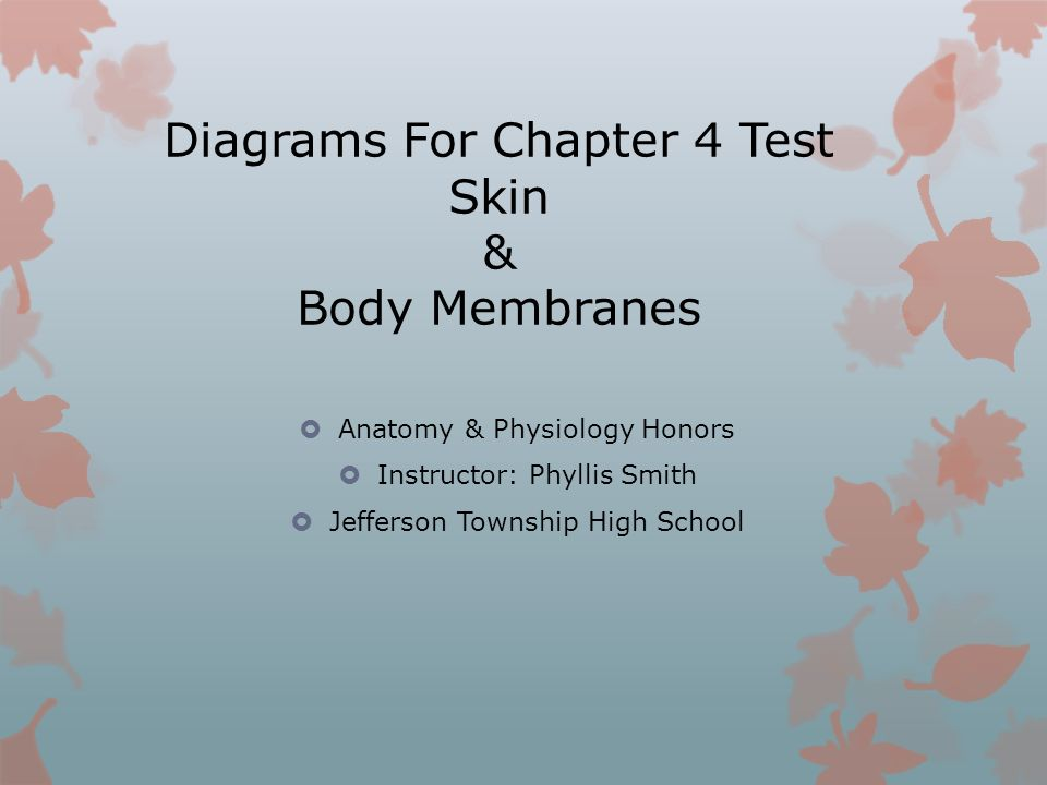Diagrams For Chapter 4 Test Skin & Body Membranes - ppt video online ...