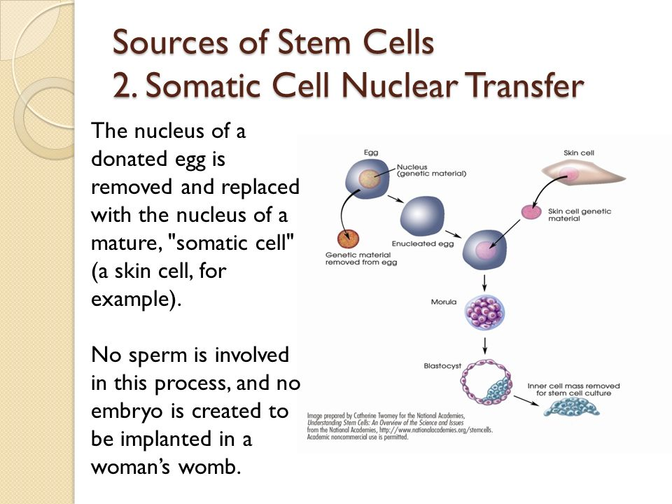 an analysis of the nuclear cell transfer in biology Analysis of mrna nuclear export kinetics in mammalian cells by microinjection serge gueroussov 1 , stefan p tarnawsky 1 , xianying a cui 1 , kohila mahadevan 1 , alexander f palazzo 1 1 department of biochemistry, university of toronto.