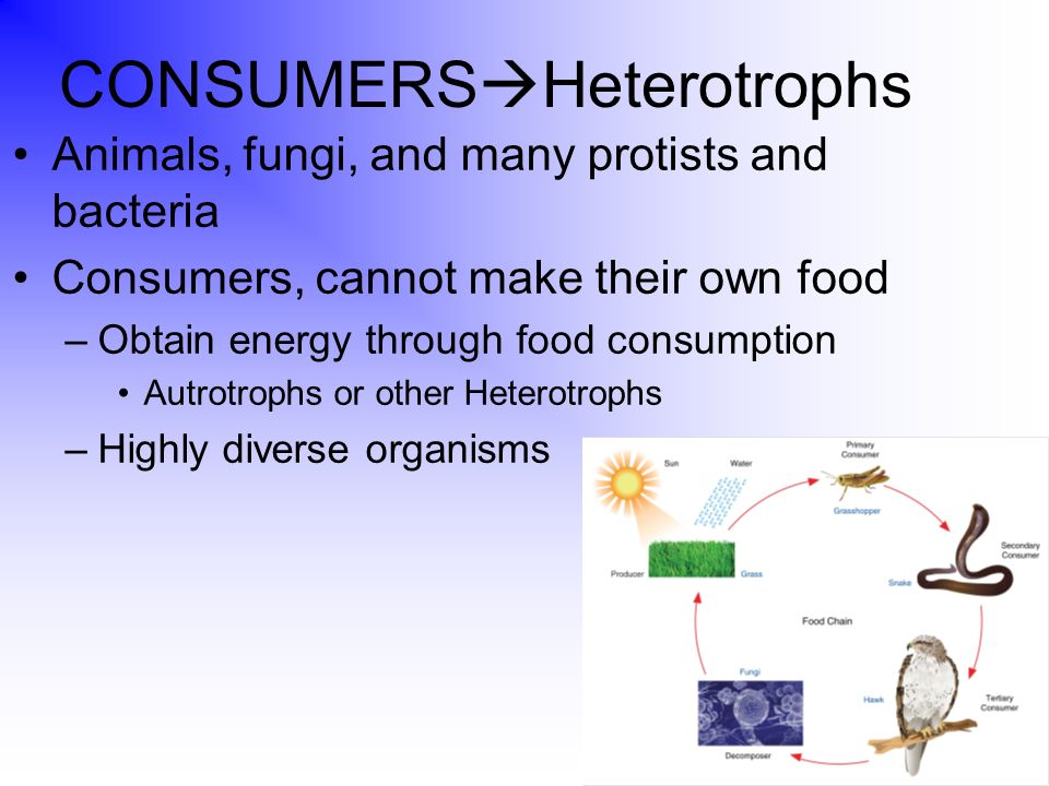 what energy systems are responsible for living organisms to acquire energy and transform energy into The flow of energy: primary production to higher trophic levels  assimilated energy into new tissue is termed  limited by the food available for organisms .