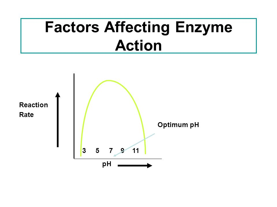 factors affecting the rate of enzyme Several factors influence the activity of enzymes in metabolic reactions: thermodynamics (temperature based changes), kinetics (movement), inhibition (chemical interference), cofactors (other molecules) can all play a role.
