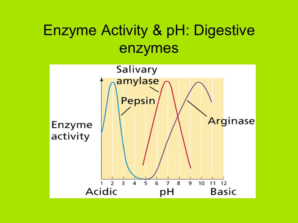 enzyme review enzymes are enzymes work by ppt download. Black Bedroom Furniture Sets. Home Design Ideas