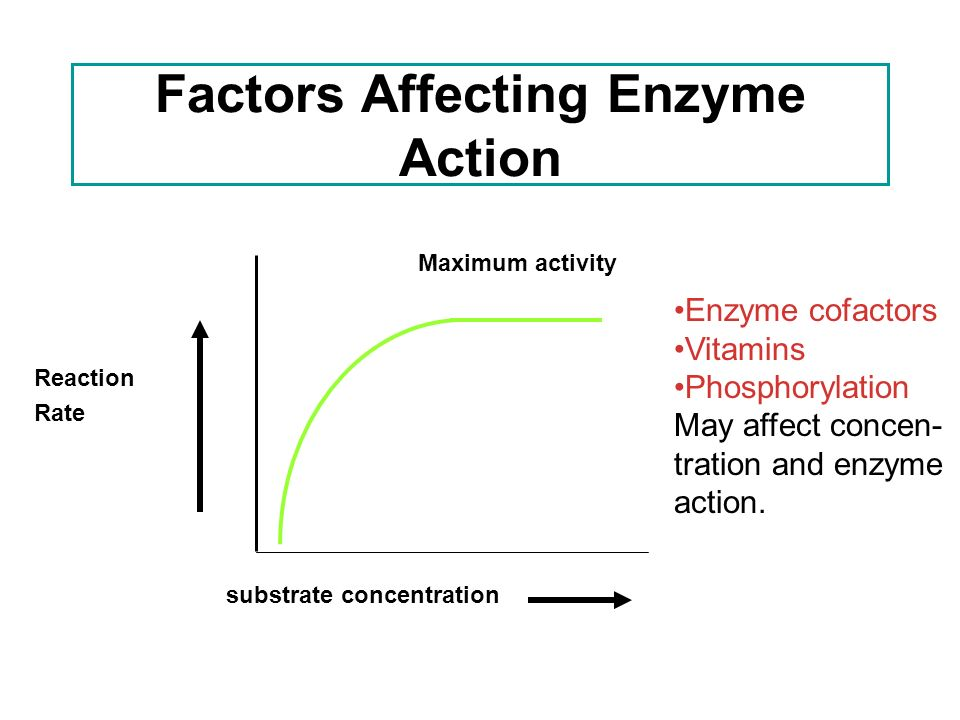 enzyme concentration affects the rate of The aim: determination of the effect of enzyme concentration on catalysis using starch an amylase enzymes are said to be catalytic proteins which.