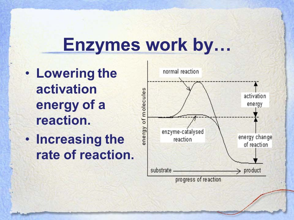 How does pH affect enzyme activity?