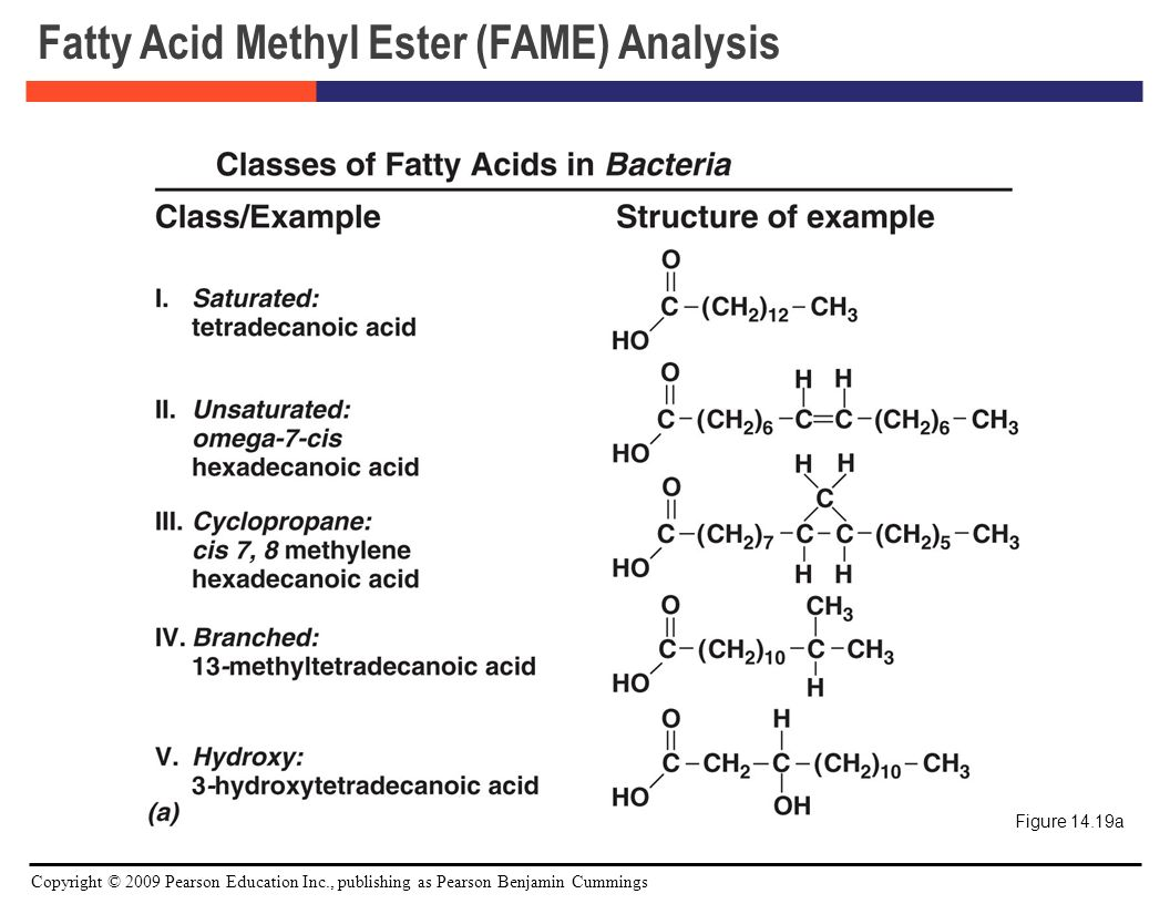 analytical characterization of fatty acids Characterization of fatty acid and triacylglycerol composition in animal fats   technology, department of analytical chemistry, studentská 573,.