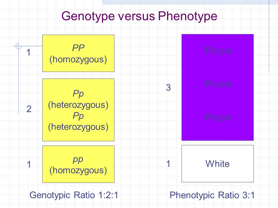 Mendelian Genetics Honors Biology. - ppt video online download